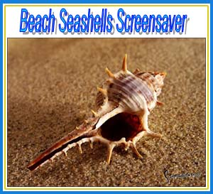 Beach Seashells Screensaver.