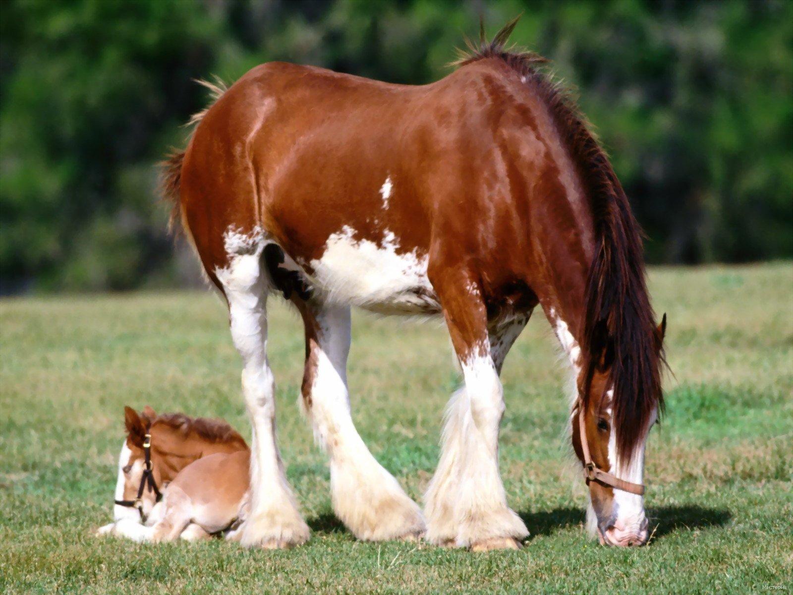 Як ебутса кони 9 фотография